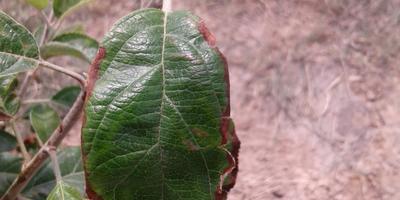 Помогите определить болезнь деревьев
