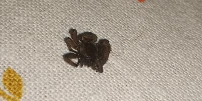 Что за вид пауков? Опасны ли они?