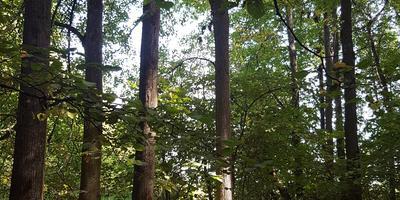 В лес за грибами, или Как я отдыхаю от городской суеты