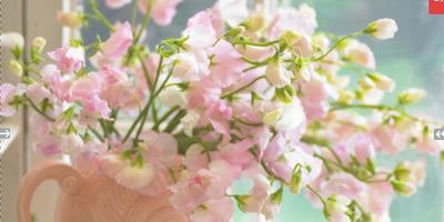 Что это за цветы и как их выращивать?