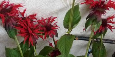 Как называется растение? Есть ли у него полезные свойства?