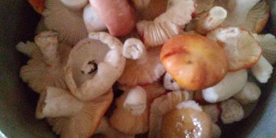 Что это за грибы?