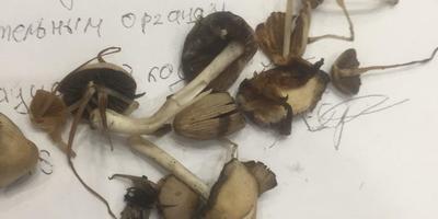 Что за грибы появились на участке?