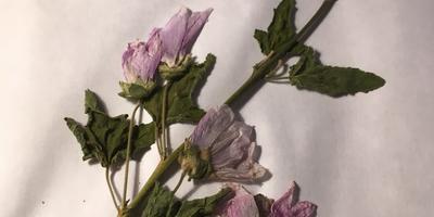 Помогите, пожалуйста, с названиями этих растений!