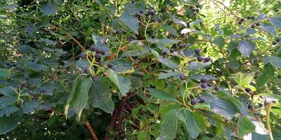 Помогите определить растение Краснодарского края!