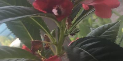 Что за цветок? И как ухаживать?