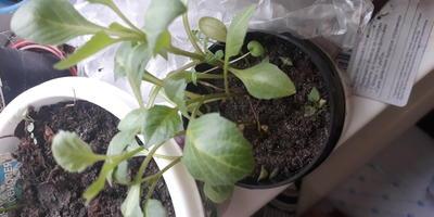 Как называется растение на фото?