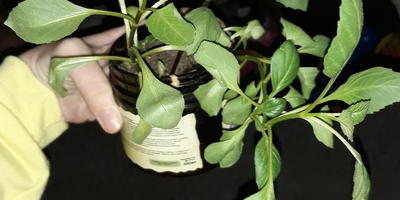 Подскажите название растения. Как за ним ухаживать?
