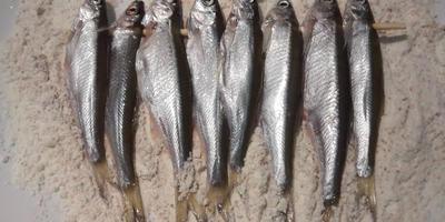 Рыбки на шпажке - мой секрет, облегчающий приготовление