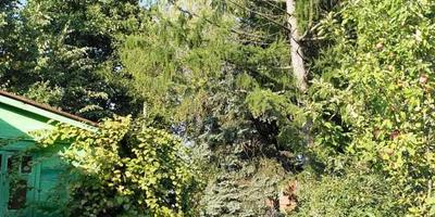 Помогите разобраться с лиственницей!