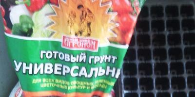 Самый крупный плод томата Сокровище Инков F1 на моем участке