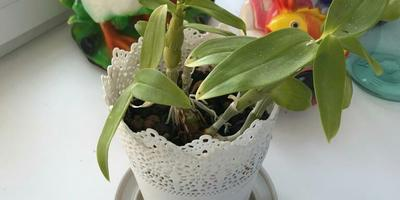 Подскажите, пожалуйста, что за растение и как за ним ухаживать?