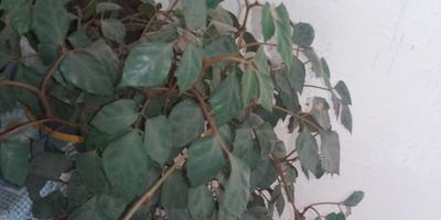 Как называются эти комнатные растения?