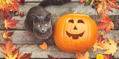 И зачем нам их Хеллоуин? Лучшие тыквенные идеи для праздника и не только