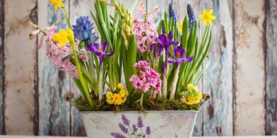 Пора готовиться к весне! Свежие идеи от Школы ландшафтного дизайна