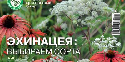 Праздник к нам приходит! Журнал «Мой прекрасный сад» в декабре