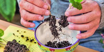 Джунгли в банке: о том, как создать оранжерею в миниатюре, читайте в январском номере журнала «Мой прекрасный сад»