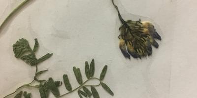 Помогите определить растение