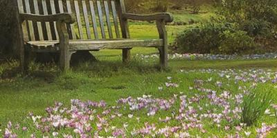 Можно ли сажать крокусы на газоне?