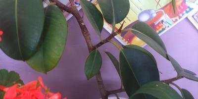 Помогите определить названия  комнатных растений