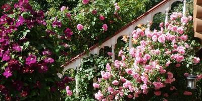 Как украсить лестницу в дом