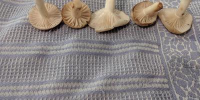 Помогите определить гриб!