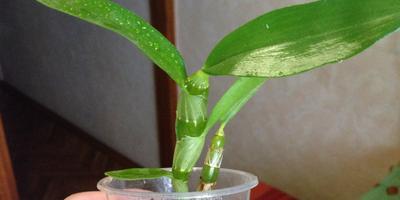Подскажите, пожалуйста, что за растение?