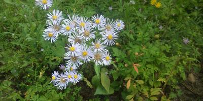 Помогите определиться, как оформить цветник возле дома