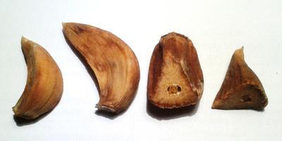При хранении чеснока зубки сначала становятся мягкими, потом приобретают коричневатый цвет и усыхают. Что это такое?