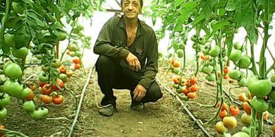 Домашнее задание №3: мои теплицы и выращивание овощей в них