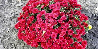 Помогите с определением названий цветов