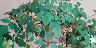 Что за растения на фото?