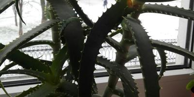 Подскажите названия этих растений