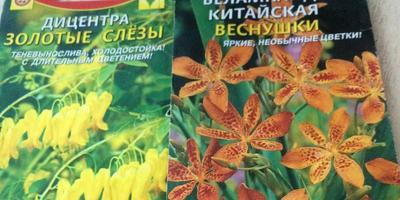 Поделитесь опытом выращивания дицентры и беламканды китайской из семян