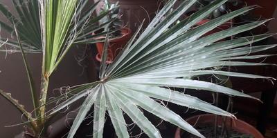 Подскажите, пожалуйста что это за растение?