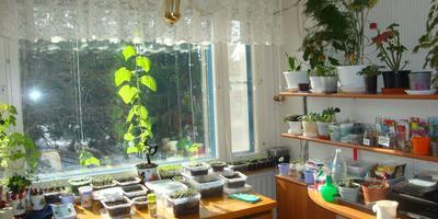 Домашний огород на моем подоконнике