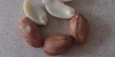 Как называется этот орех?