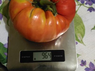 100 000 рублей — за помидор!