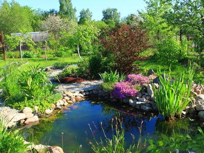 "Конкурс ""Мой любимый сад"" с SEEDSPOST"