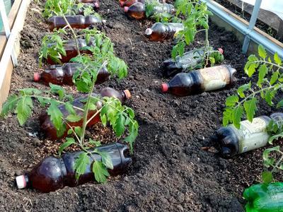 """Конкурс """"Я и органическое земледелие"""""""