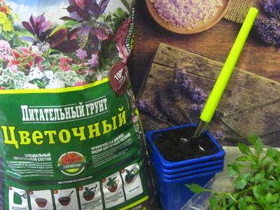 """Конкурс """"Секреты выращивания цветов"""""""