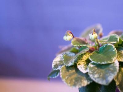 Конкурс Мой зимний сад с Gardena