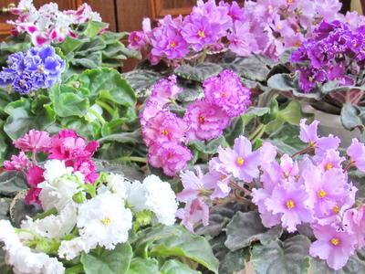 Конкурс домашних растений с брендом «Агрикола»