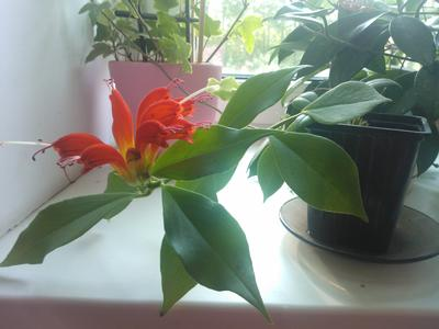 Конкурс домашних растений