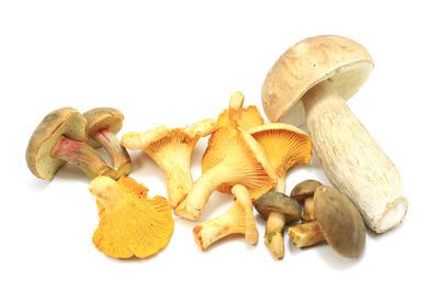 Сортировка грибов