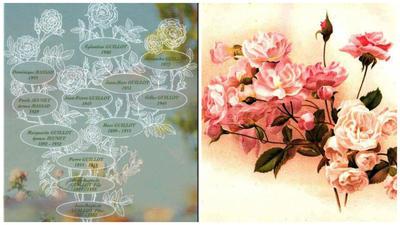 Генеалогическое древо семьи Гийо, фото с сайта kajuta.net и старинные полиантовые розы Paguerette и Magnonette, фото с сайта Meemelink