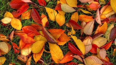 Опад - еще не гумус. Фото с сайта all4desktop.com