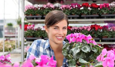 Цветы в горшках - прекрасный подарок на романтические праздники