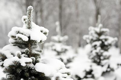 Снег - отличный теплоизолятор