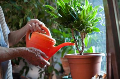 Подкармливая домашние растения, не переусердствуйте - все хорошо в меру
